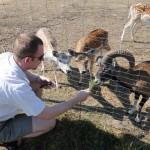 Niektóre z naszych zwierząt są bardzo oswojone i chętnie przychodzą, aby jeść człowiekowi z ręki.
