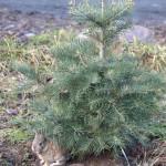 Dziki króliczek (ok. 3 - tygodniowy) pod drzewkiem