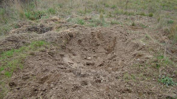 Tak wygląda dołek rujowy daniela. Ten nie jest zbyt głęboki, zdarzają się glębsze.