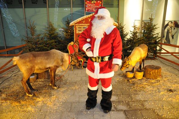 Mikołaj w swej zagrodzie z reniferami