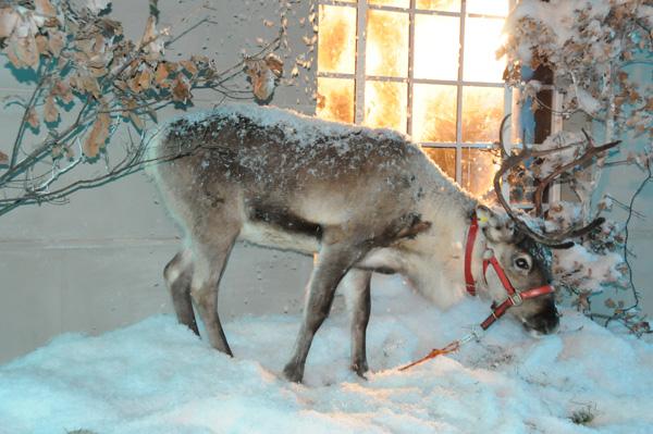 W śniegu było rudolfowi bardzo do twarzy. Cóż, że śnieg sztuczny. Wiadomo, telewizja kłamie... :)