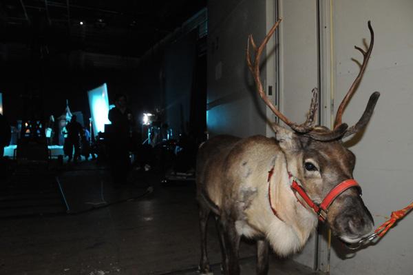 Dla nas najważniejsze było to, że zaprocentowała dotychczas włożona praca w oswojenie naszych reniferów. Mimo tłumów ludzi, świateł, plątaniny kabli, wiatraków i urządzeń, Rudolf pozostał niewzruszenie spokojny, co zaowocowało świetnym wynikiem pracy filmowców.