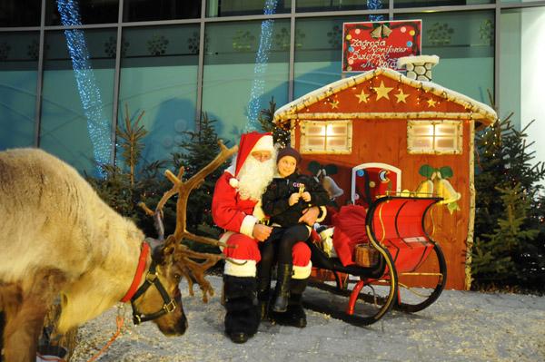 Nasza zagroda reniferów Świętego Mikołaja