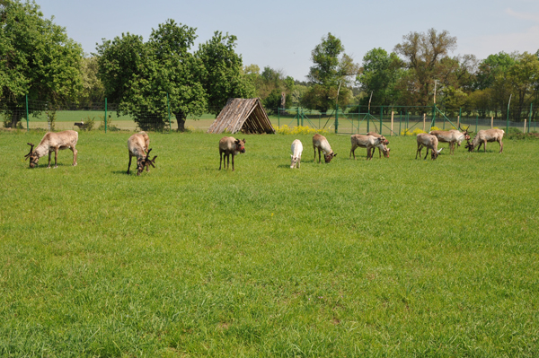 Latem jako pasza objętościowa najlepsze jest pastwisko.