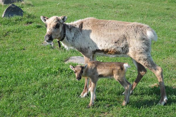 Jokk ze swoją mamą - już ponad 3 tygodnie po urodzeniu.