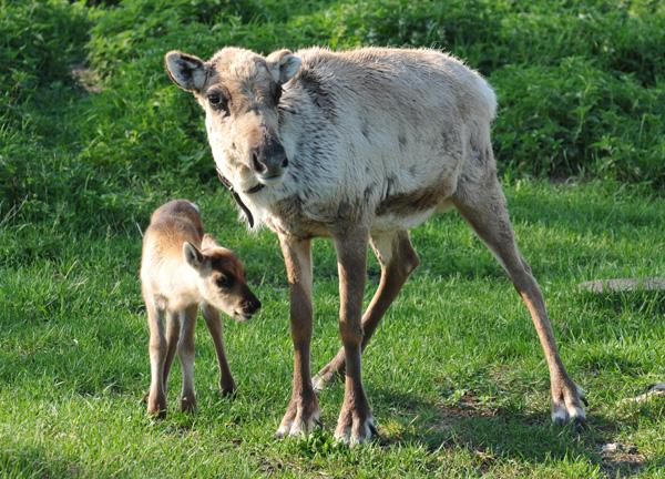 Jokk ze swoją mamą