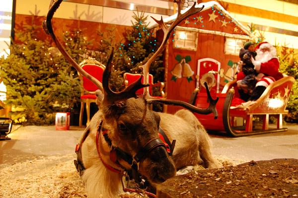 Zapewniamy kompleksową organizację eventu - zwierzęta, prowadzących (w tym św. Mikołaja), piękne dekoracje, oświetlenie oraz nagłośnienie.